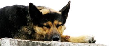 03_bigdog