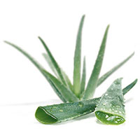 06_aloe